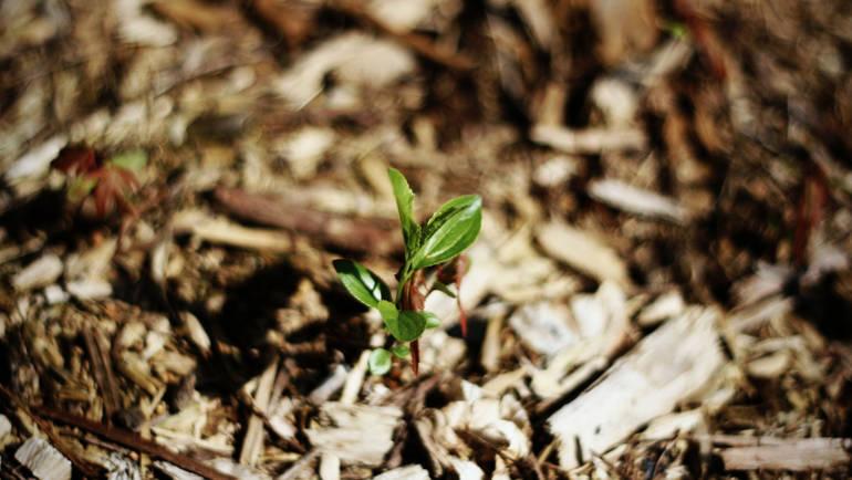 Paillez vos plantations